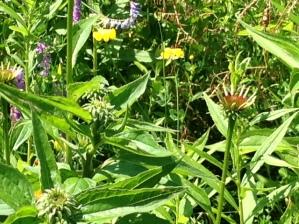 Weeds or Wildflowers