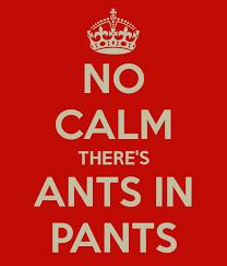 Ants in Pants