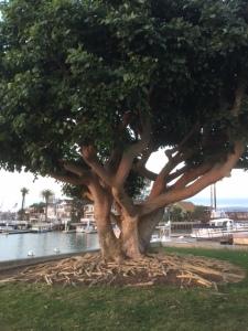 Newport Tree and Island