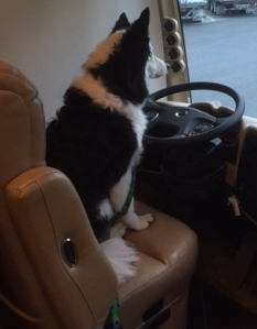 Tarra Driving2