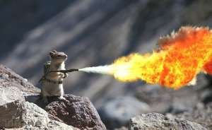SquirrelFlameThrower
