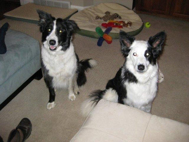 jock-and-tarra-2010-adoption